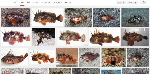 [さわっちゃダメ!] 釣りをしていると時々釣れる危険な毒を持っている魚たち