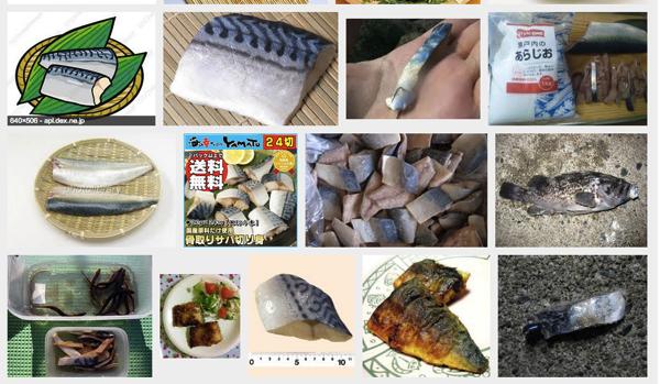 サワラ、カンパチ、ソイなど肉食系の魚が釣れるエサ「サバの切り身」