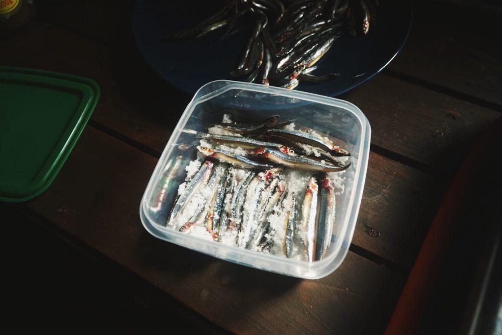 釣りエサとして万能なキビナゴはアンチョビにしても最高に美味い食材