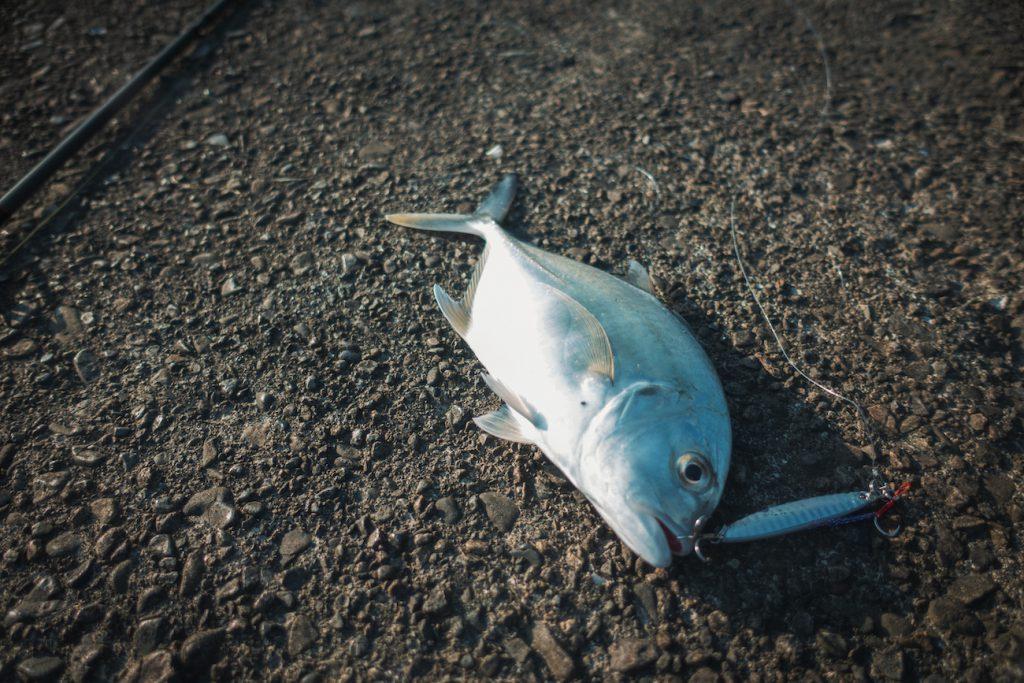 ルアーで魚が釣りたくなったらメタルジグ投げとくと何かしら釣れますよ!